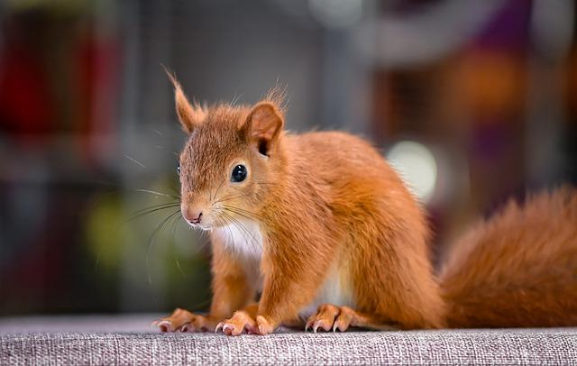 squirrel-4519518_640.jpg